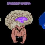Rozhodování a iracionální omyly, kterých se dopouští i váš mozek